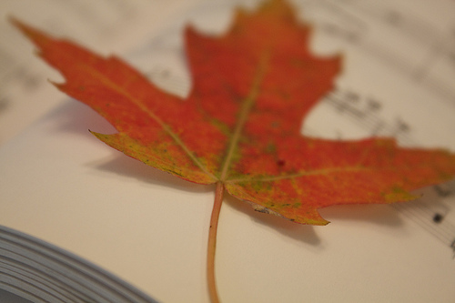 Fall leaf photo by Anne Hornyak via Flickr