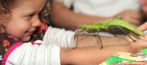 Insect Discovery Lab