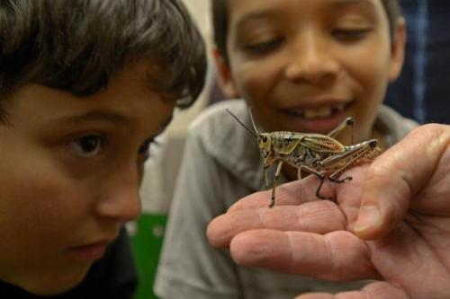 Insect Discovery Lab - photo by East Bay Times